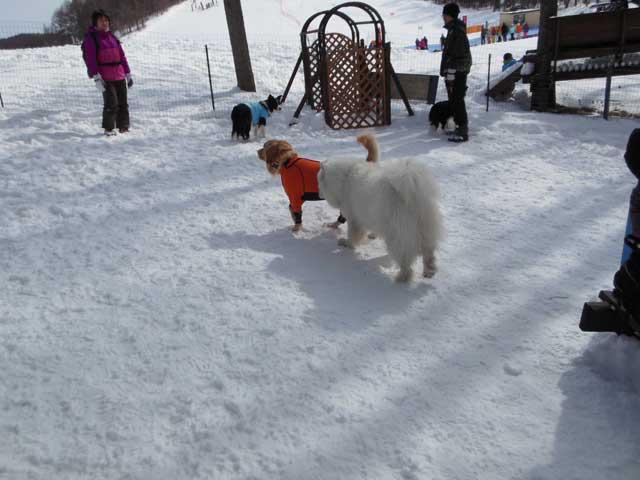 日曜に雪遊びに行ってきました_b0120492_155176.jpg
