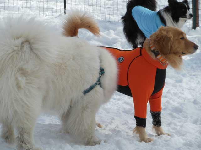 日曜に雪遊びに行ってきました_b0120492_1555579.jpg