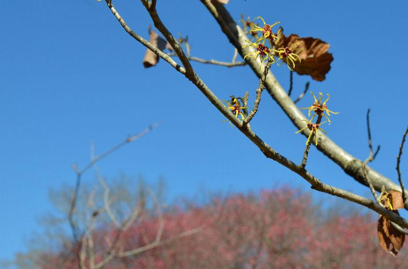 2月中旬 ミヤマホオジロと春の兆し・・・_b0078795_1922876.jpg