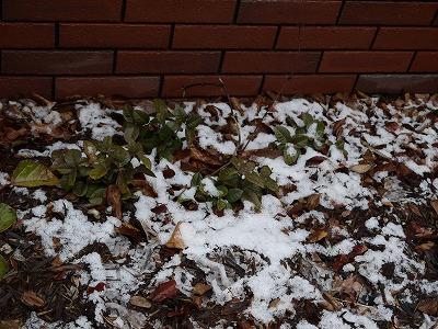 冬~春のお手入れに_a0233896_13595166.jpg
