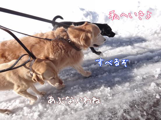 雪と氷の見晴らしの丘_f0064906_17111789.jpg