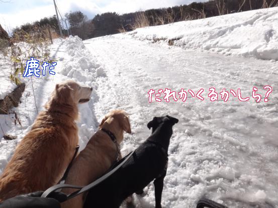 雪と氷の見晴らしの丘_f0064906_17114522.jpg