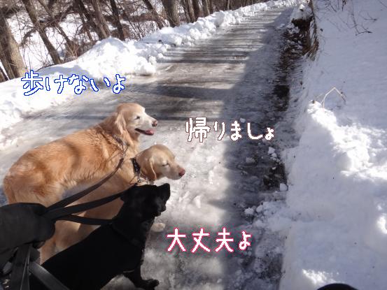 雪と氷の見晴らしの丘_f0064906_1714367.jpg