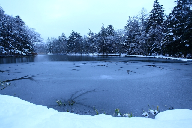 雲場池の凍結_f0091207_23334384.jpg
