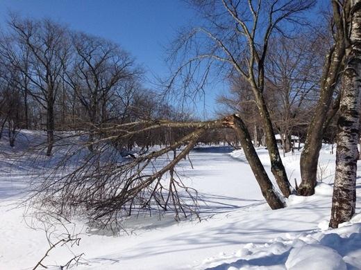2013年2月21日(木):そろそろ池の浚渫時期[中標津町郷土館]_e0062415_19592259.jpg