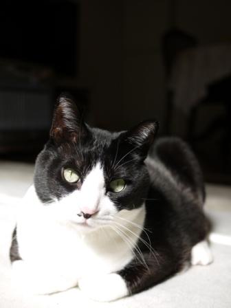 猫のお友だち ハナくん編。_a0143140_19503493.jpg