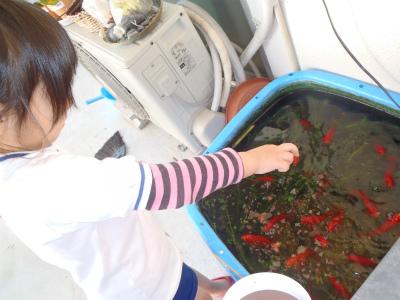 金魚の大産卵_c0180460_2235160.jpg