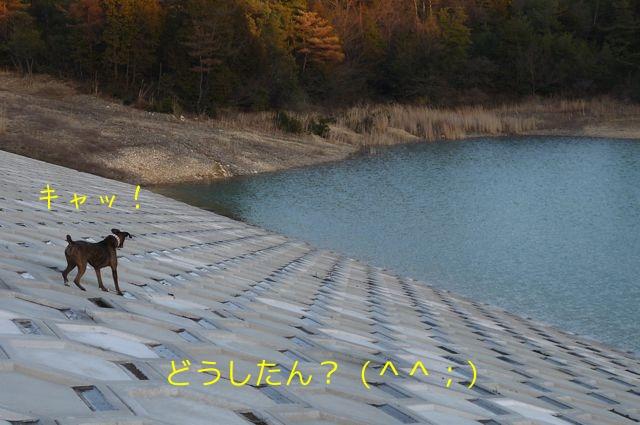 f0177261_1391012.jpg