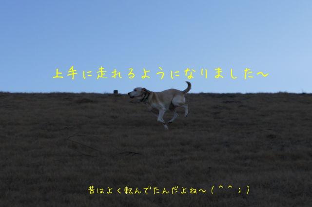 f0177261_1395615.jpg