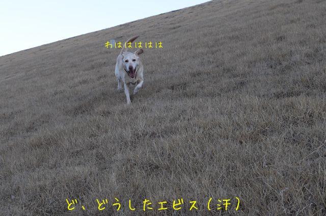 f0177261_1414027.jpg
