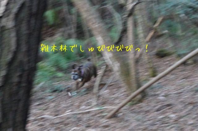 f0177261_1445699.jpg