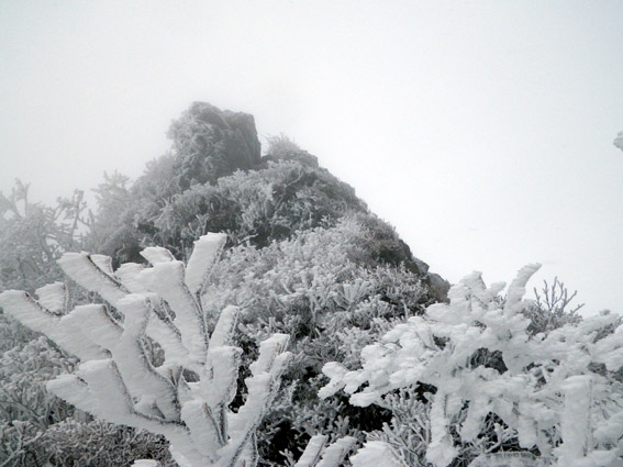 2013.02.19(火) スノシューハイキング_a0062810_191649.jpg