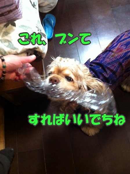 b0067012_0454057.jpg