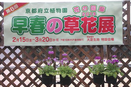 植物園 早春の花展_e0048413_20335950.jpg