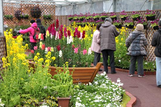 植物園 早春の花展_e0048413_20341156.jpg