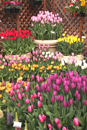 植物園 早春の花展_e0048413_20343274.jpg