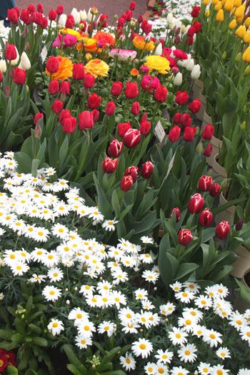 植物園 早春の花展_e0048413_20344261.jpg