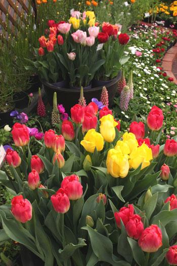 植物園 早春の花展_e0048413_20345683.jpg
