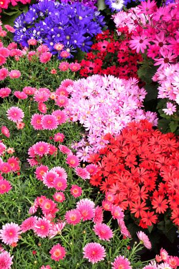 植物園 早春の花展_e0048413_20352034.jpg