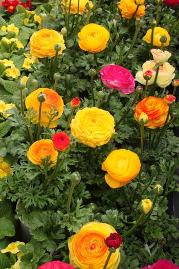 植物園 早春の花展_e0048413_2035897.jpg