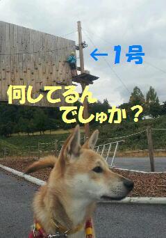 遼のUSJ☆わらびも一緒_b0207320_16504298.jpg
