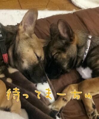 遼のUSJ☆わらびも一緒_b0207320_17191140.jpg