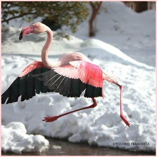 雪のどうぶつえん_f0031022_22504074.jpg
