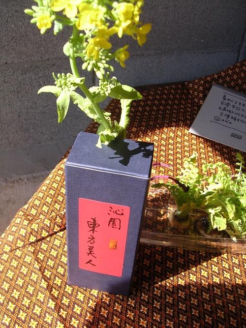 春の兆しと台湾と_e0295926_17122448.jpg
