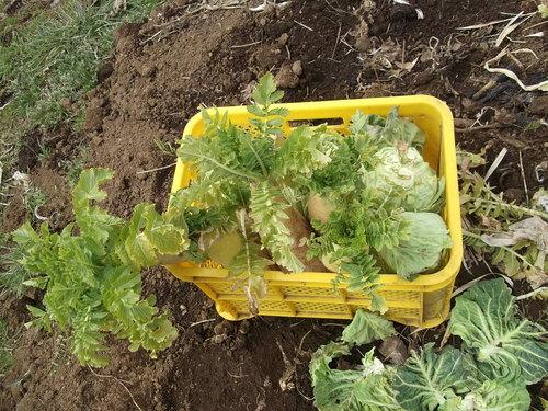 野菜畑は冬に逆戻り.....春はまだまだ!_b0137932_2335165.jpg