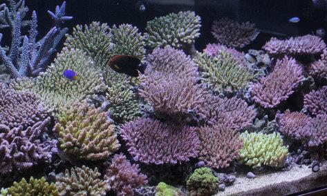 在庫満タン!!サンゴ入荷しました。_d0221436_21302892.jpg