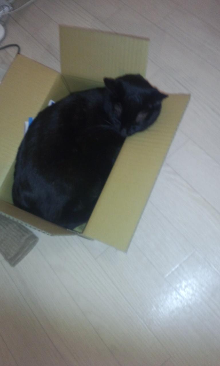 段ボール大好き猫_e0114246_744487.jpg