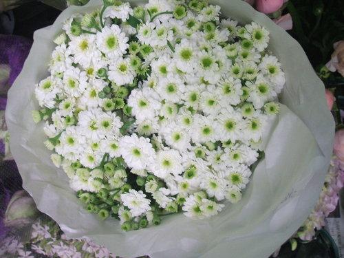 マトリカリア ホワイトワンダー他_b0239952_21385723.jpg