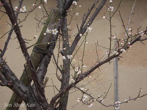 春の陽射し_a0164068_23495942.jpg