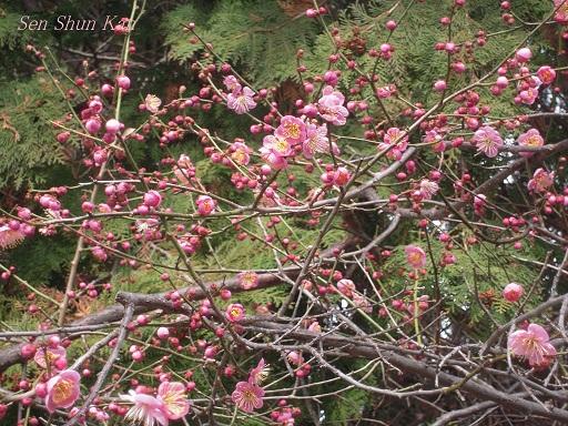 春の陽射し_a0164068_23502487.jpg