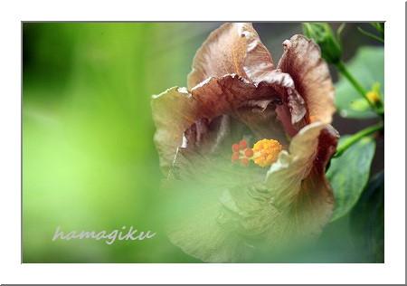 変わった花たち_e0305388_923541.jpg