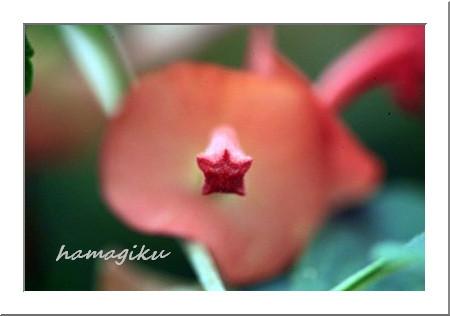 変わった花たち_e0305388_92530.jpg