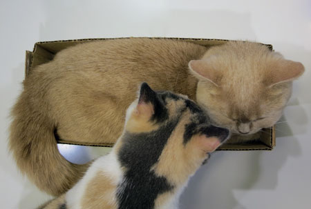 Baccarat press plate,kitty,猫の日_c0108595_2305020.jpg