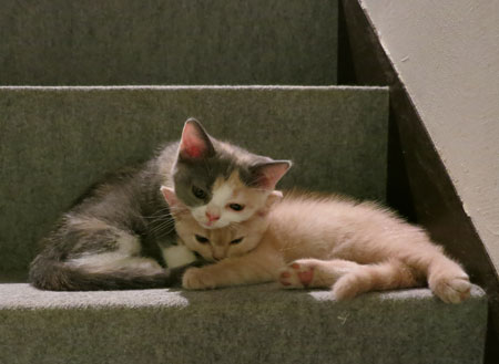 Baccarat press plate,kitty,猫の日_c0108595_2314245.jpg