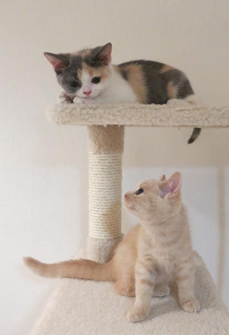 Baccarat press plate,kitty,猫の日_c0108595_2344339.jpg