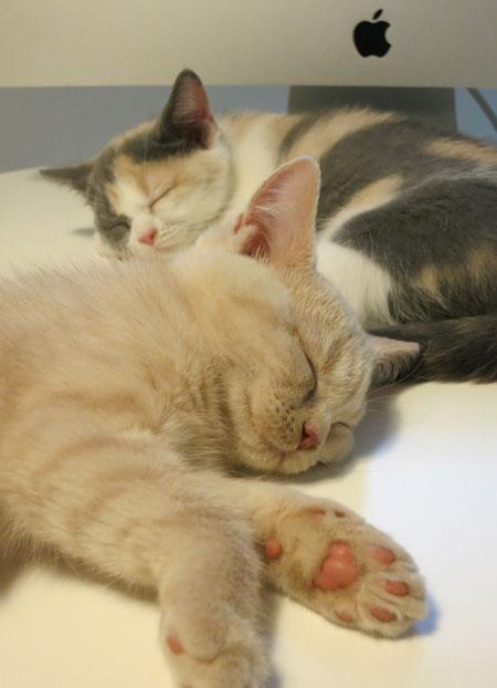 Baccarat press plate,kitty,猫の日_c0108595_2361644.jpg