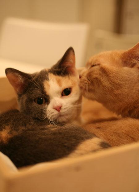 Baccarat press plate,kitty,猫の日_c0108595_2383537.jpg
