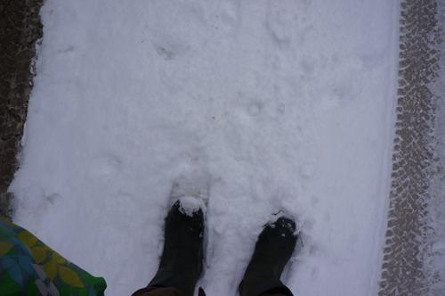 雪の森を一人で歩く_f0106597_23591446.jpg