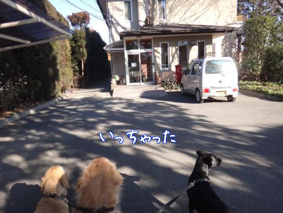 山犬の街中散歩_f0064906_2029482.jpg