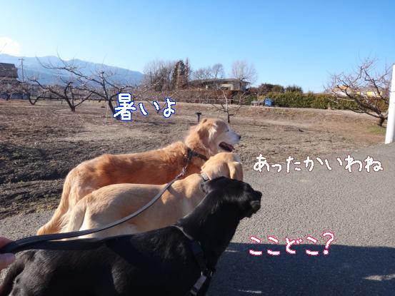 山犬の街中散歩_f0064906_20323466.jpg