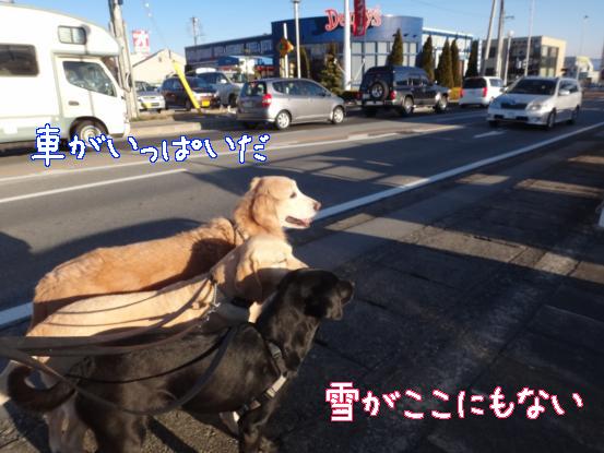 山犬の街中散歩_f0064906_20341245.jpg
