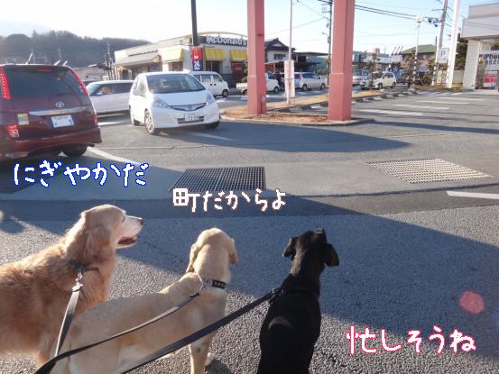 山犬の街中散歩_f0064906_20351017.jpg
