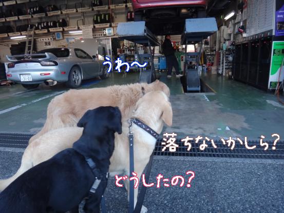 山犬の街中散歩_f0064906_20374218.jpg