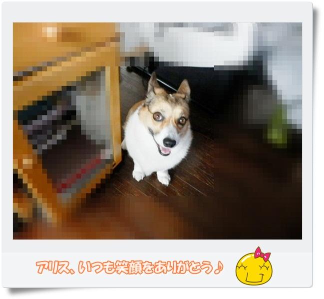 f0182121_10264131.jpg