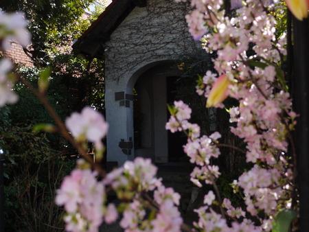 シェ松尾松濤レストラン様の装花 河津桜と春の花のパステルミックスで _a0042928_2111978.jpg