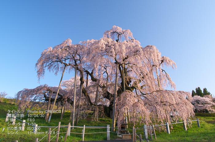 日本三大桜_e0056449_22115741.jpg